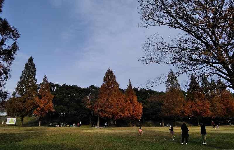 ペルセウス座流星群の観測スポットの平和公園内メタセコイア広場