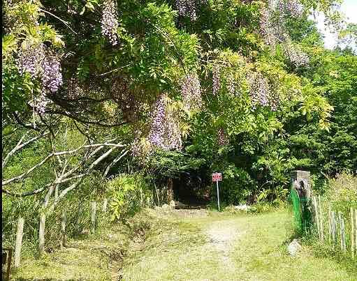 みずがめ座δ流星群の観測スポット東谷山の尾張戸神社参道