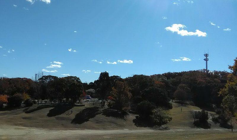 ペルセウス座流星群の観測スポット大高緑地公園の若草山芝生広場